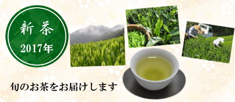 2017年 新茶
